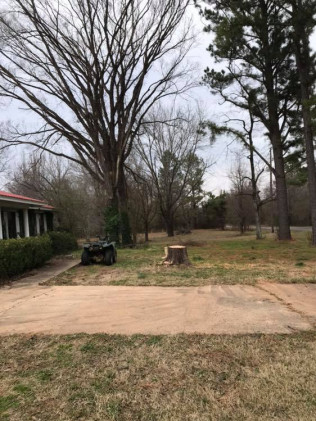 dead tree removal after vilonia, arkansas