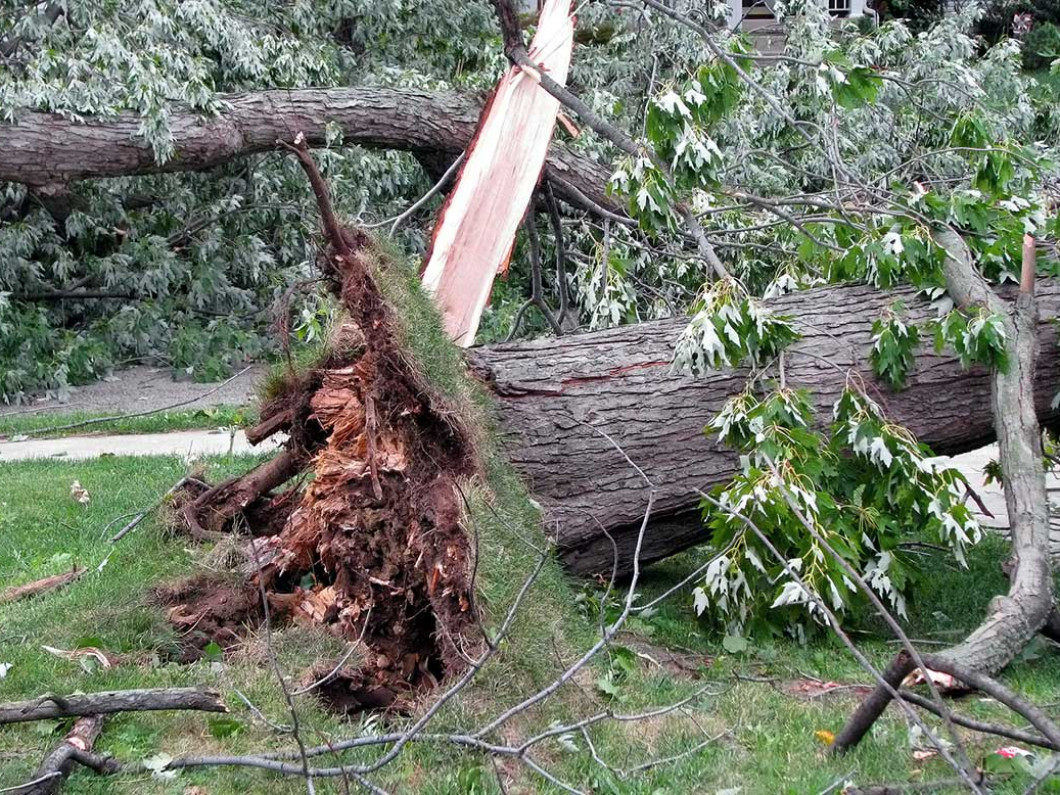 Return Order to Your Property After a Storm