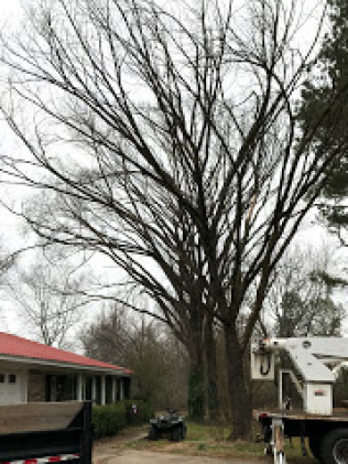 dead tree removal before vilonia, arkansas