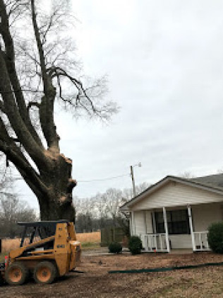 dangerous tree removal lonoke, arkansas